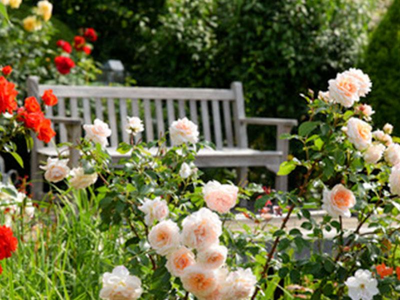 Aménagement d'une roseraie au Foyer de Rosporden – Les Etangs